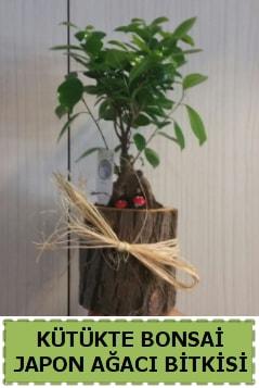 Kütük içerisinde doğal bonsai ağacı  Ordu çiçek yolla