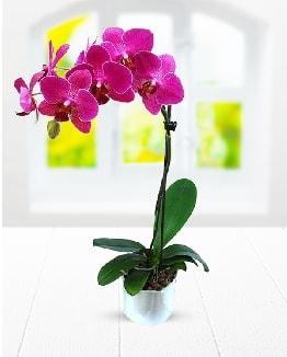 Tek dallı mor orkide  Ordu çiçek gönderme