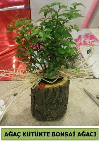 Doğal ağaç kütük içerisinde bonsai ağacı  Ordu çiçek yolla , çiçek gönder , çiçekçi