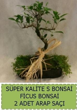 Ficus S Bonsai ve arap saçı  Ordu çiçek yolla