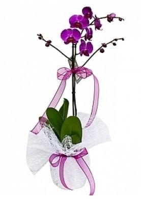 Tekli Mor Orkide  Ordu İnternetten çiçek siparişi