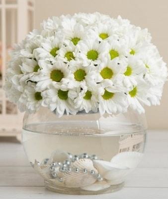Fanusta beyaz Papatya  Ordu çiçek gönderme