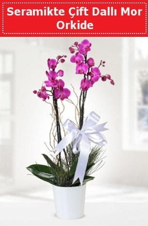 Seramikte Çift Dallı Mor Orkide  Ordu uluslararası çiçek gönderme