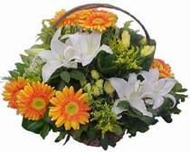 Ordu güvenli kaliteli hızlı çiçek  sepet modeli Gerbera kazablanka sepet